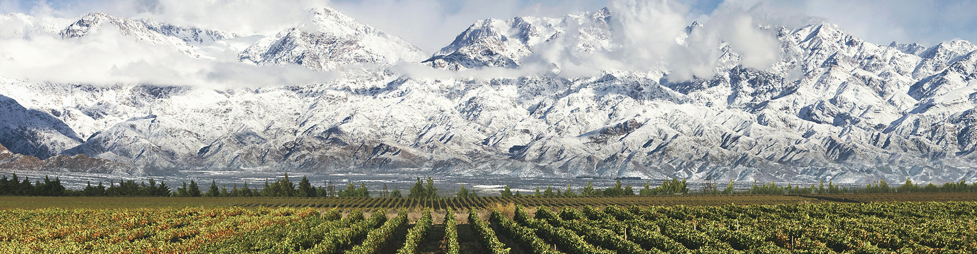 Argentinian Vineyards in Mendoza in front of the Andes