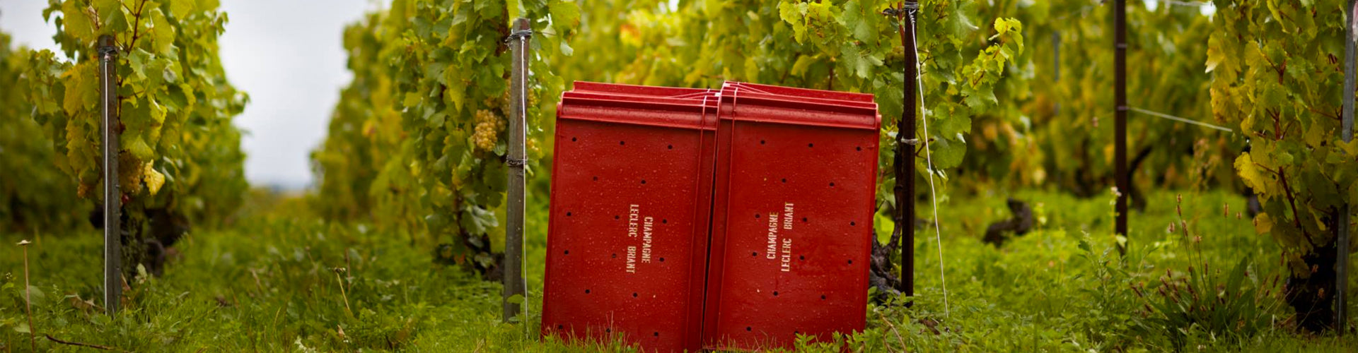 Grape picking boxes in Leclerc Briant Vineyards