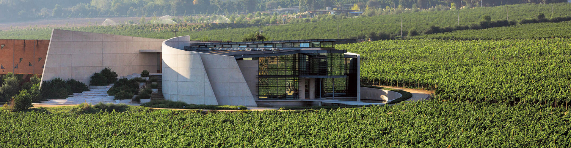 Viña Errazuriz Winery & Vineyards in Chile's Aconcagua Valley