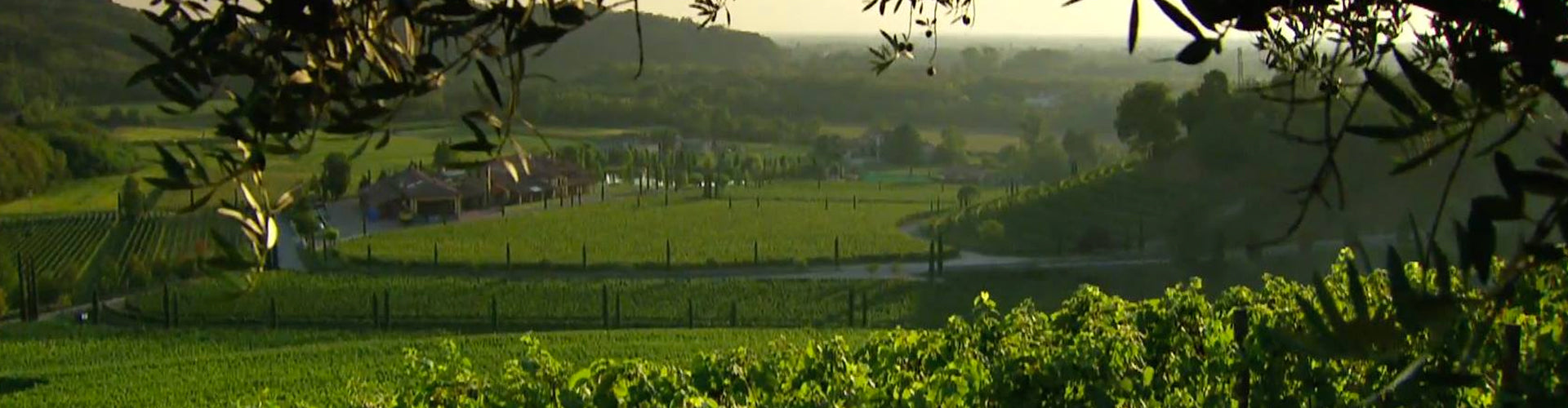 Jermann Winery and Vineyards in Friuli
