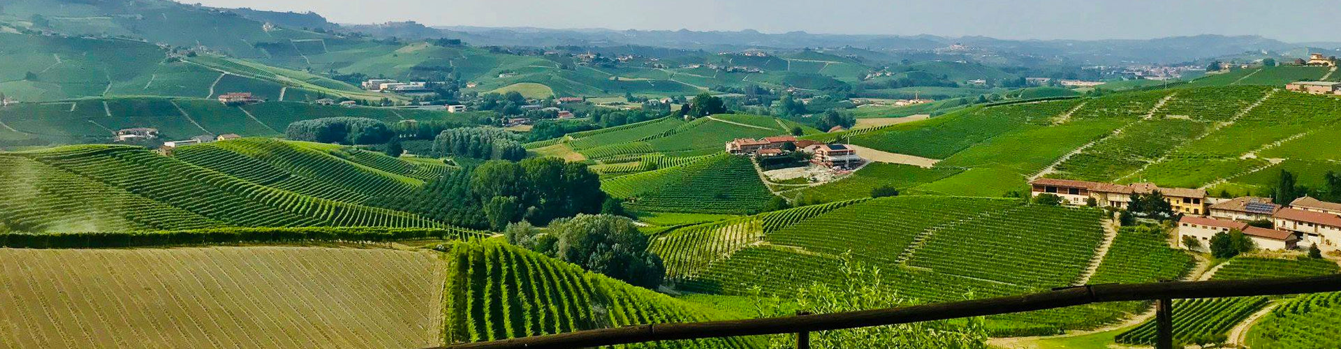 View over Giacomo Fenocchio Vineyards in Monforte d'Alba
