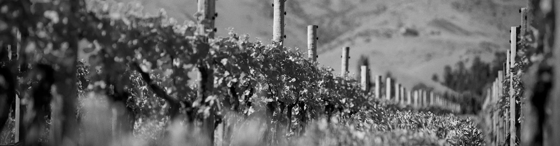 Mahi vineyard in Marlborough