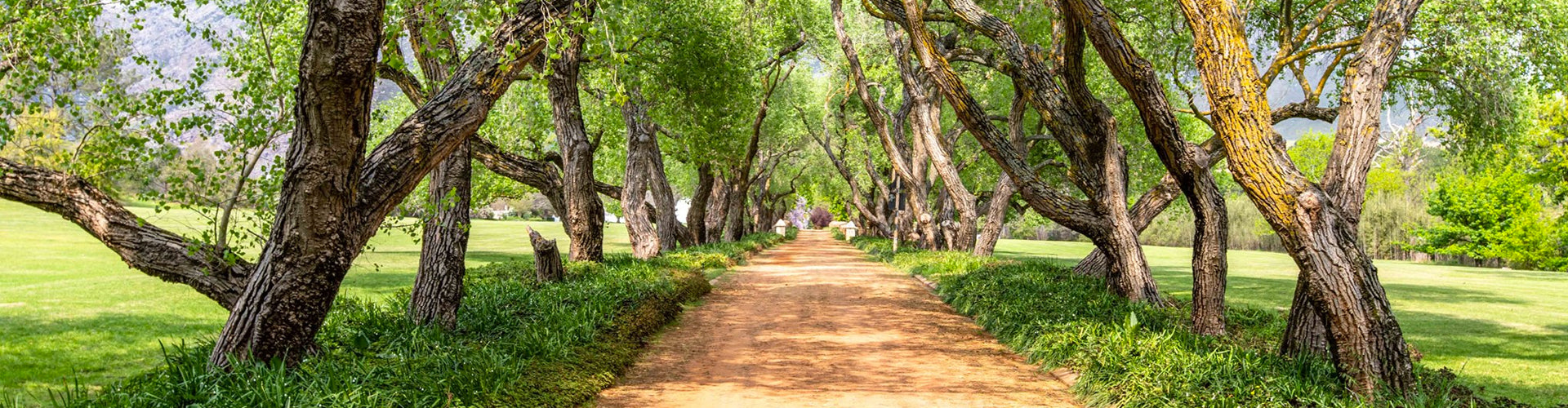 The tree-lined driveway leading to Anthonji Rupert Wines in Franschhoek, South Africa