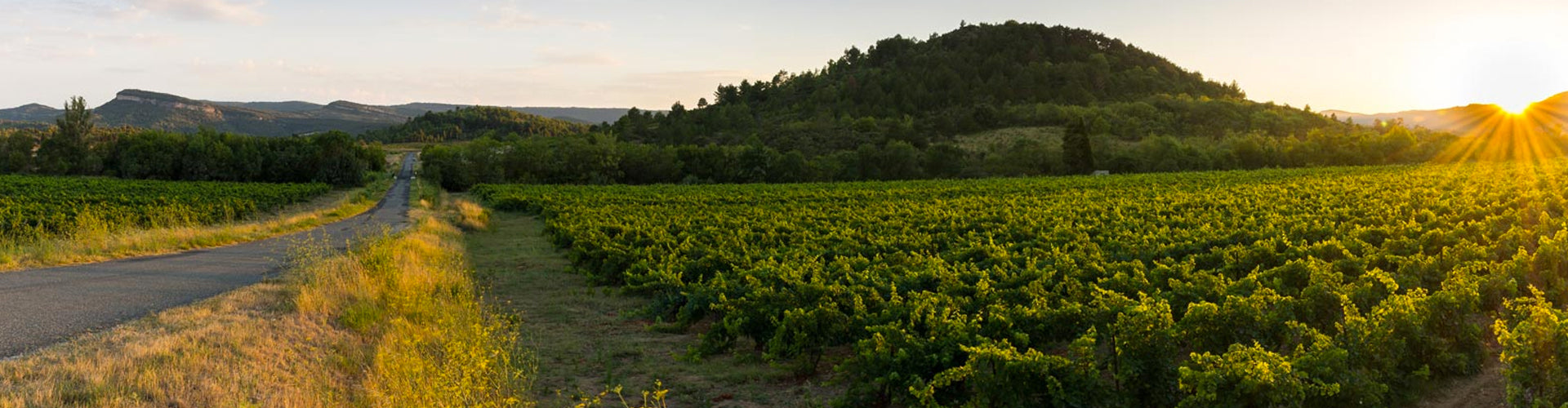 Olivier Coste Vineyards in the Languedoc
