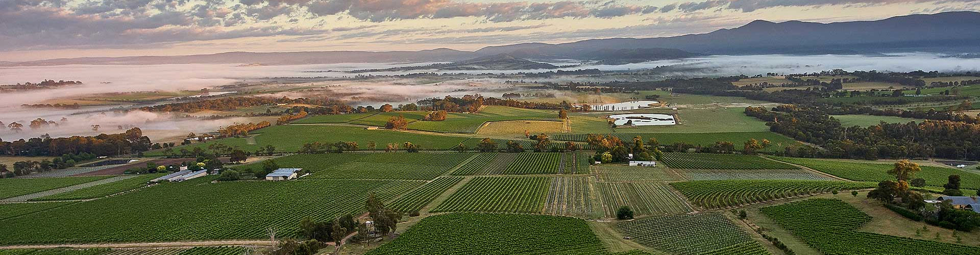 Ariel Image of Yarra Yering Vineyards in Australia's Yarra Valley