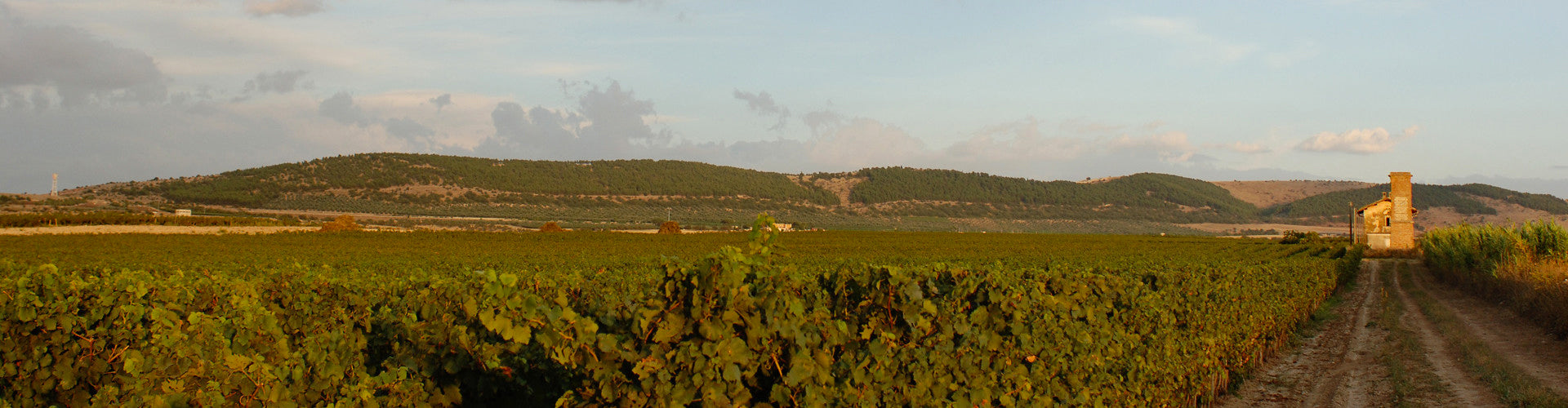 Tormaresca Vineyards in Puglia, Southern Italy