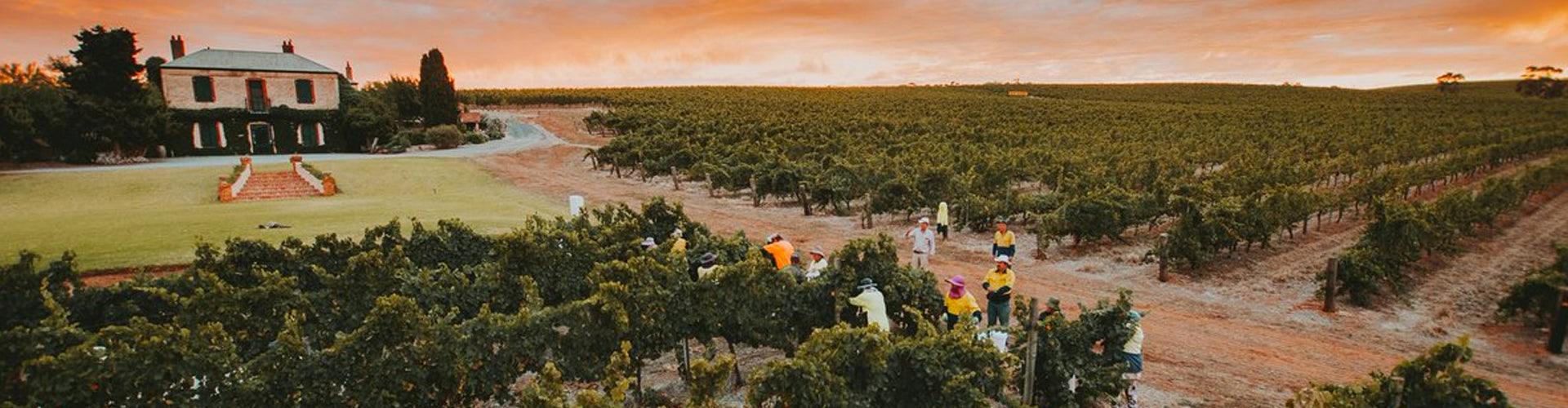 Clos Clare Vineyards Australia
