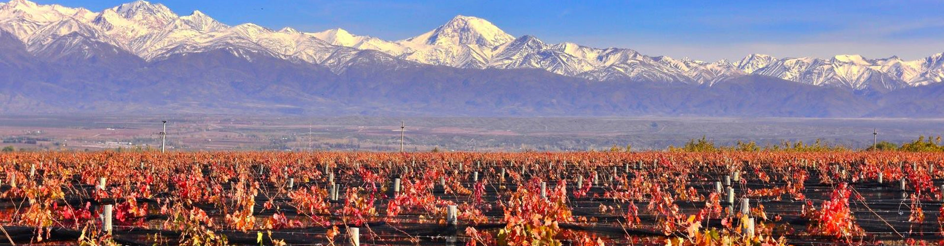 Masi Tupungato Vineyards in Mendoza's Uco Valley