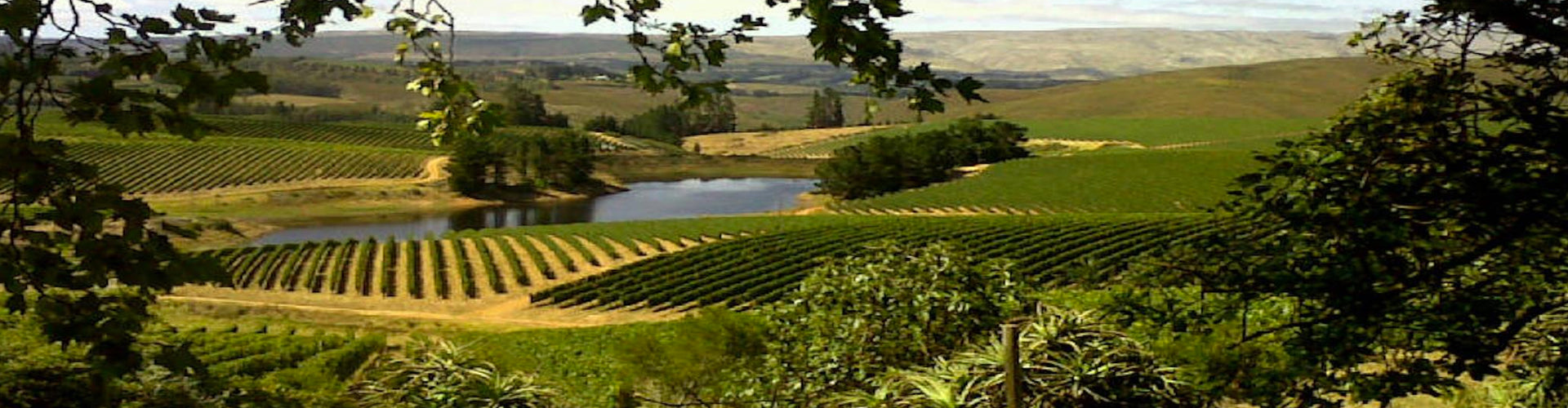 Richard Kershaw Wines Vineyards in Elgin, South Africa