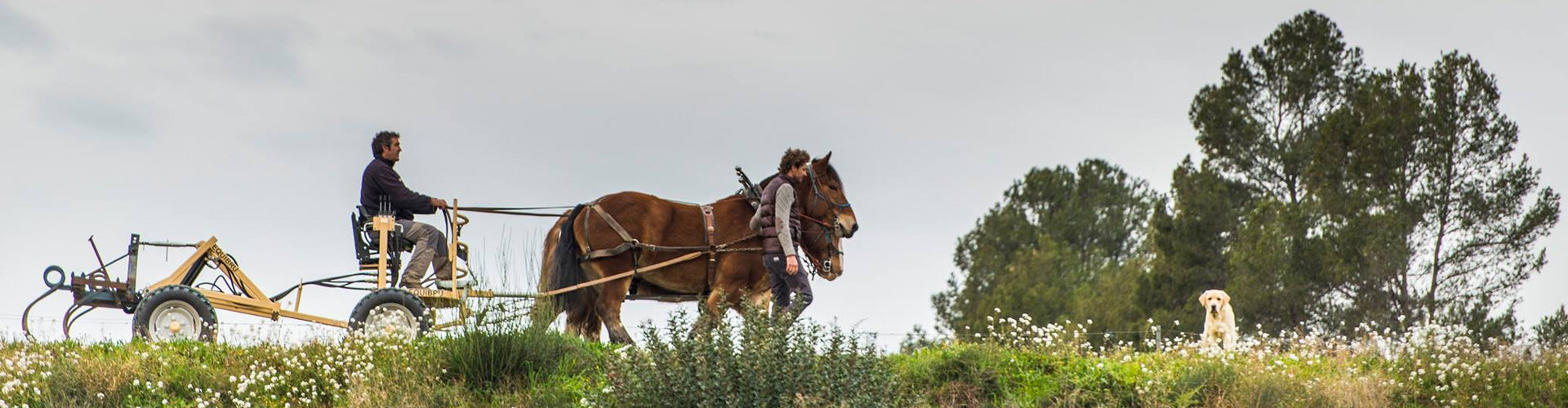 Pepe Raventós tending his vineyards with horse-drawn cultivator