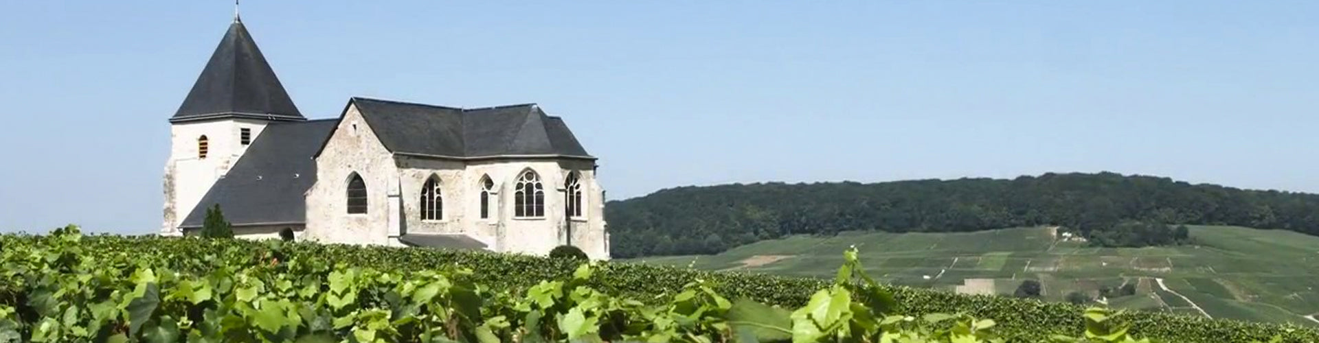 Champagne V. Testulat Vineyards in the Marne Valley