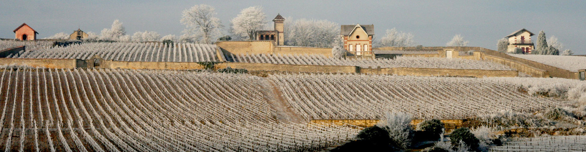 Domaine Pierre Morey Meursault vineyards in winter