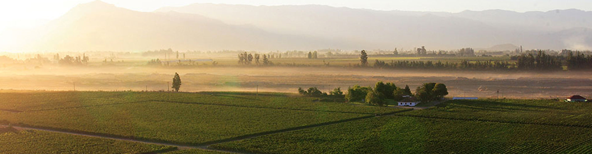 Morandé Vineyards in Chile's Casablanca Valley