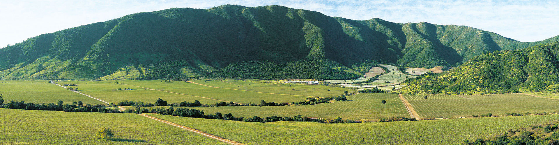 Caliterra Winery and Vineyards in Colchagua Valley, Chile