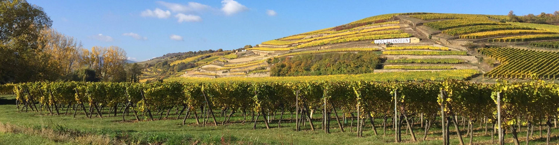 Muré Clos Saint Landelin Vineyards in Alsace
