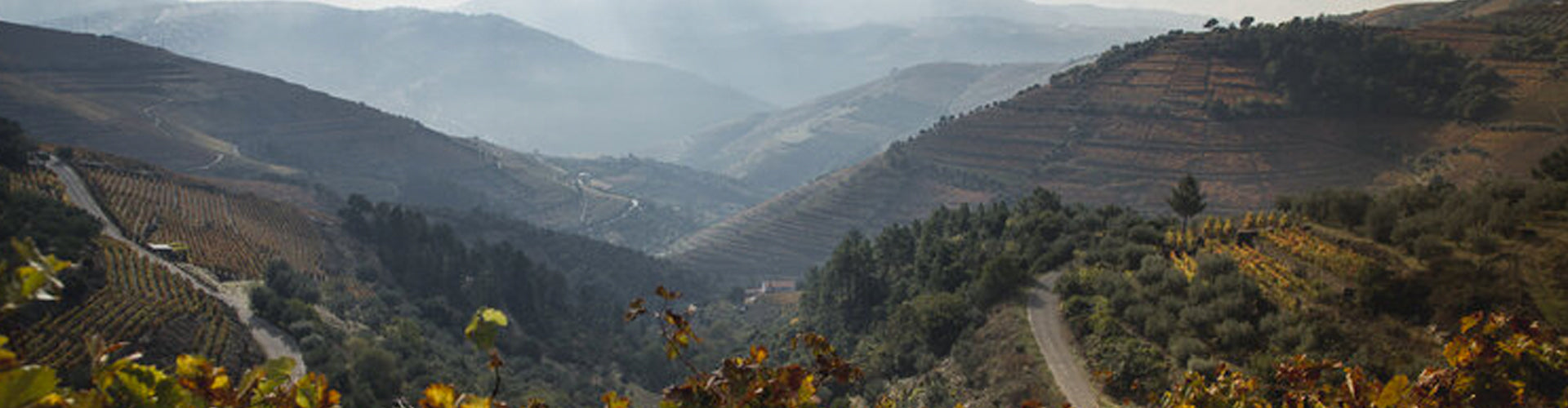 Elevated panoramic view across the Douro Vineyards in Portugal