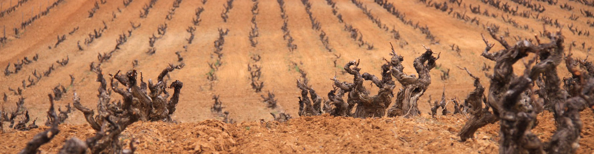 Aalto Vineyards in Spain's Ribera del Duero