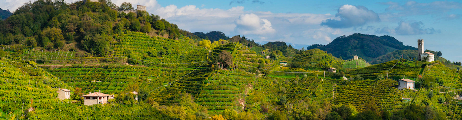The vineyards of Carpenè Malvolti in the hills of Conegliano, Italy