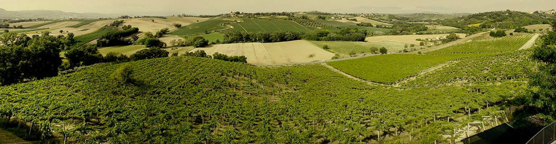 Fattoria La Valentina Vineyards in Italy's Abruzzo Wine Region