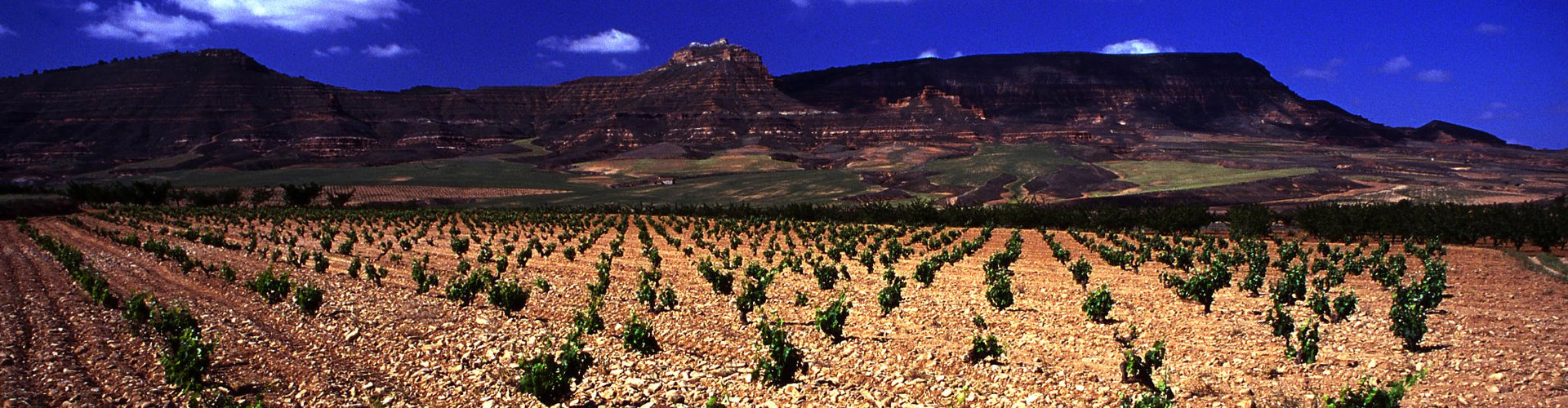 Bodegas San Alejandro Vineyards in the Calatayud region of Northern Spain