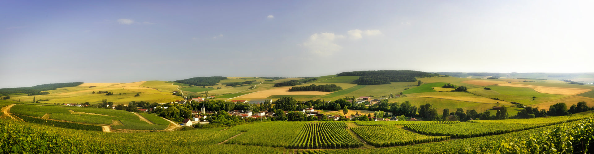 Champagne Drappier Vineyards in Urville, France