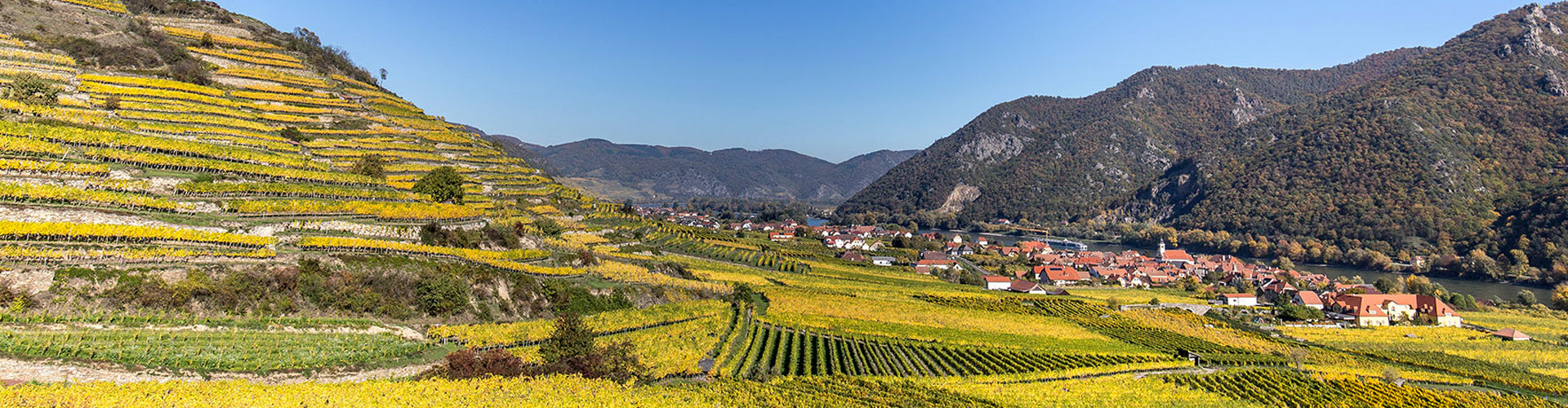 Rudi Pichler Vineyards in the Wachau region of Austria