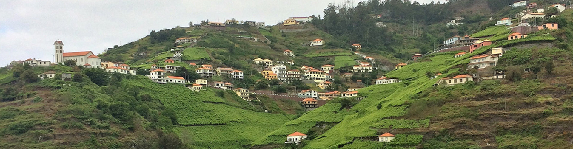 Vineyards perched on the hillsides of Madeira