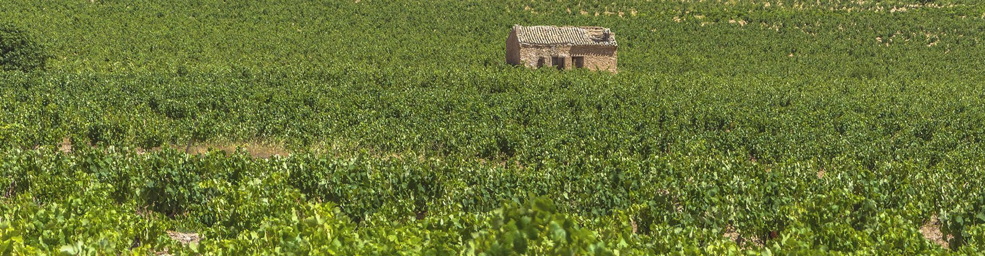 Finca Bacara Vineyards in Jumilla DOP Spain