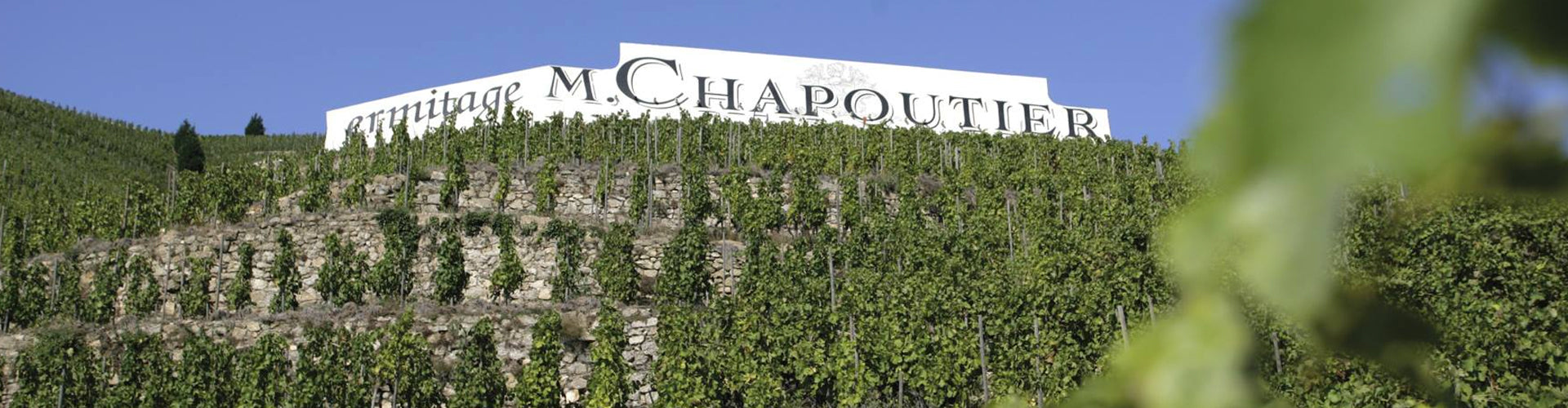 M. Chapoutier Ermitage Vineyards in the Northern Rhône