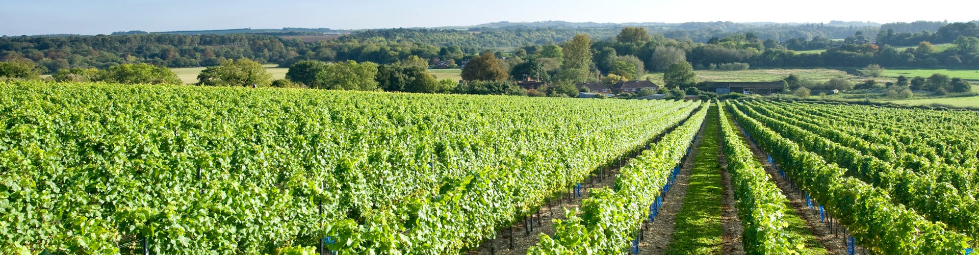 Cottonworth Vineyards in Hampshire, England