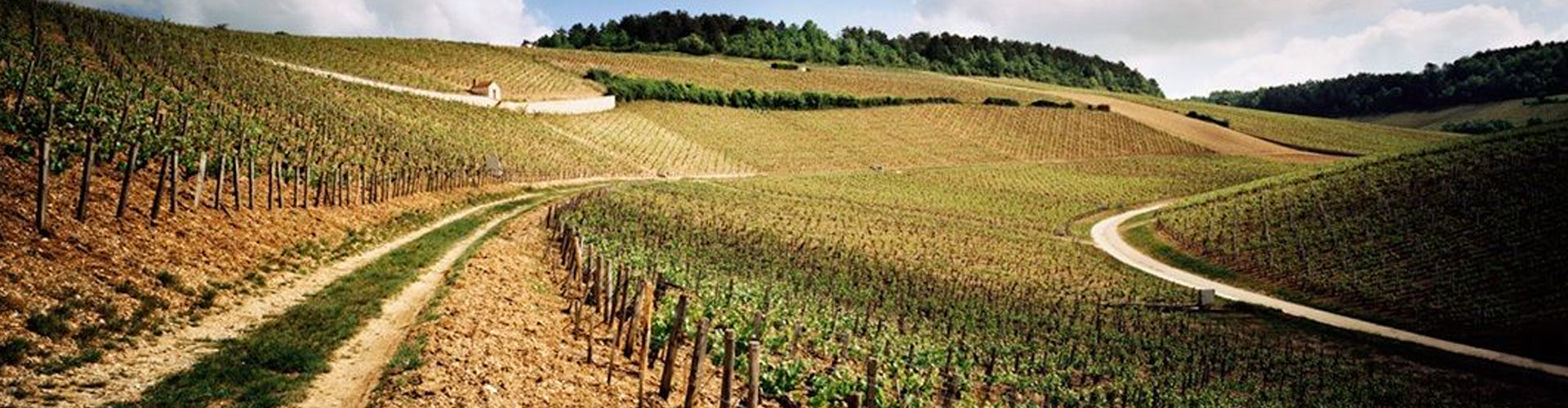 The Vineyards of Chablis in Burgundy, France