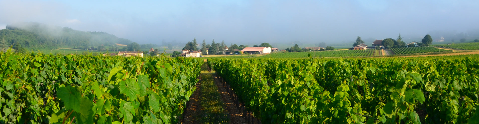 The vineyards of Château du Cèdre in Cahors, France