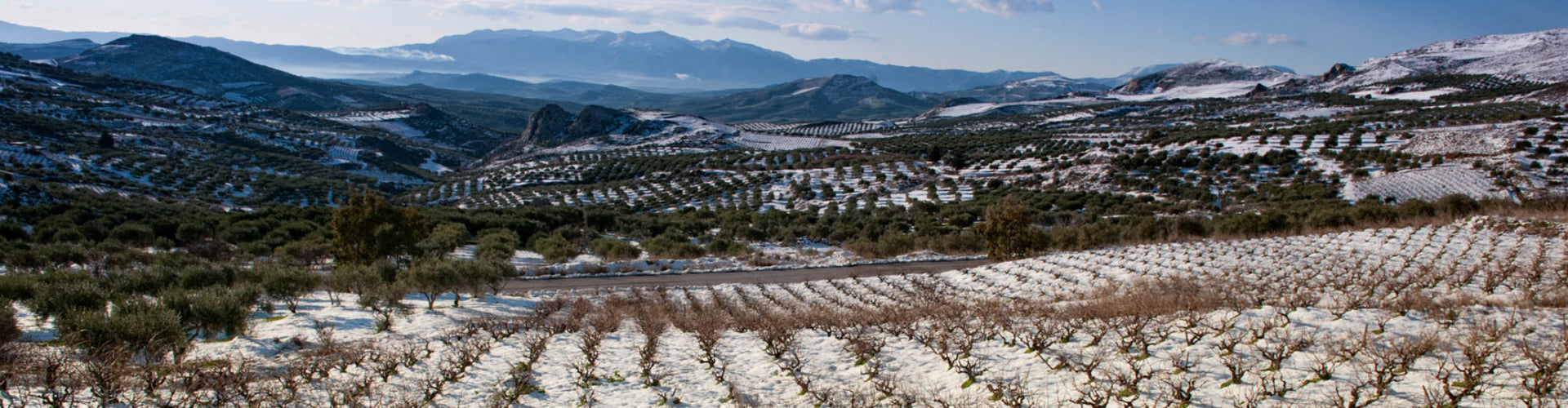 Lyrarakis Vineyards in Crete covered in Snow