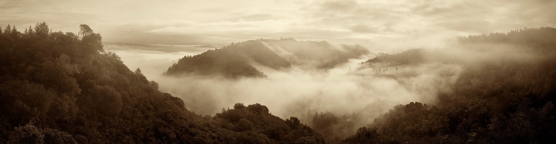 Fog covered Promontory Vineyards in Napa Valley