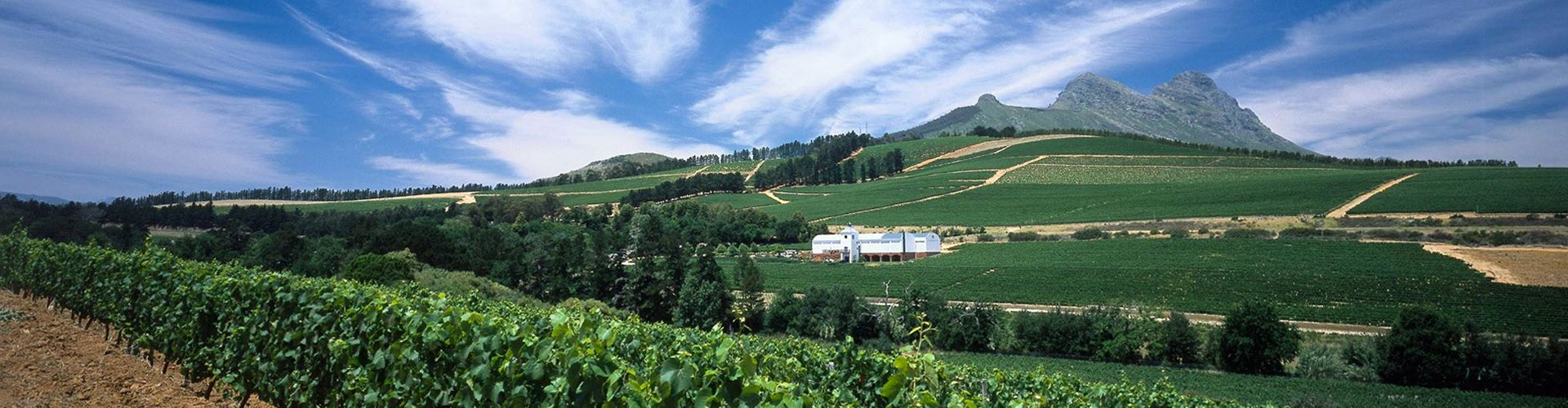 Laibach Wines in the Simonsberg region of Stellenbosch