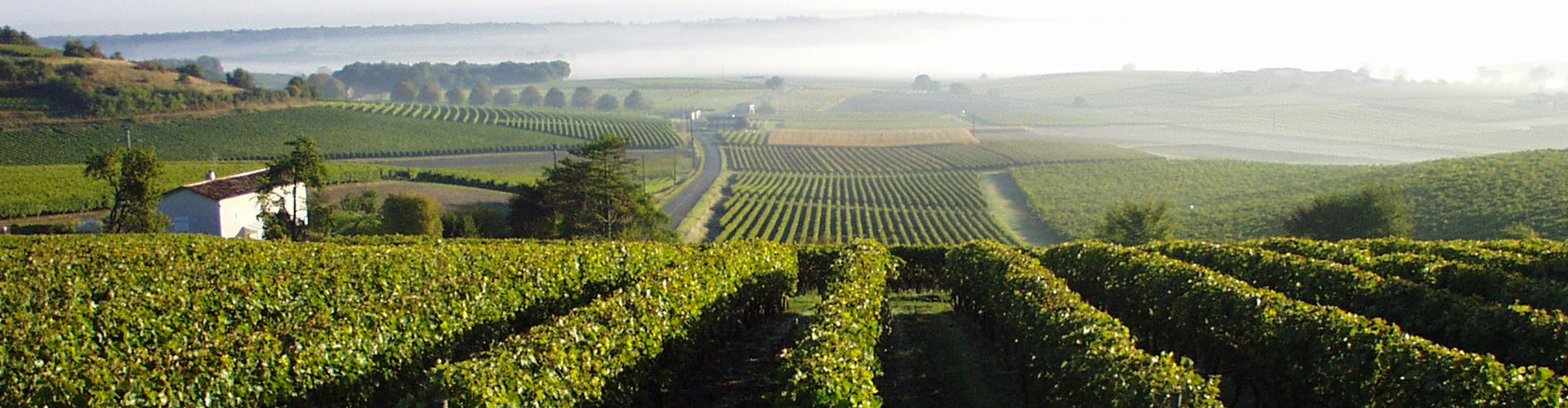 Cognac Tesseron Vineyards