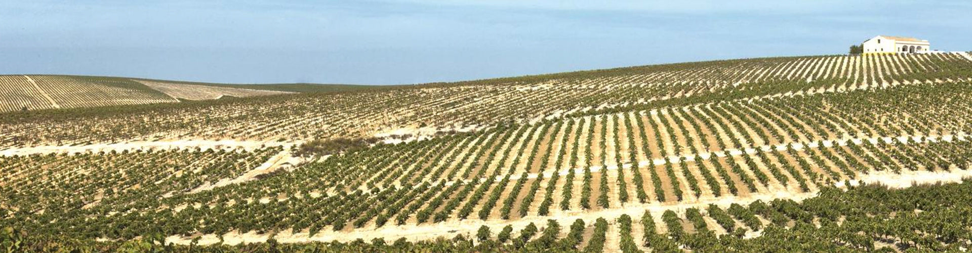 Valdespino's Marcharnudo Vineyard the Grand Cru of the Sherry DO