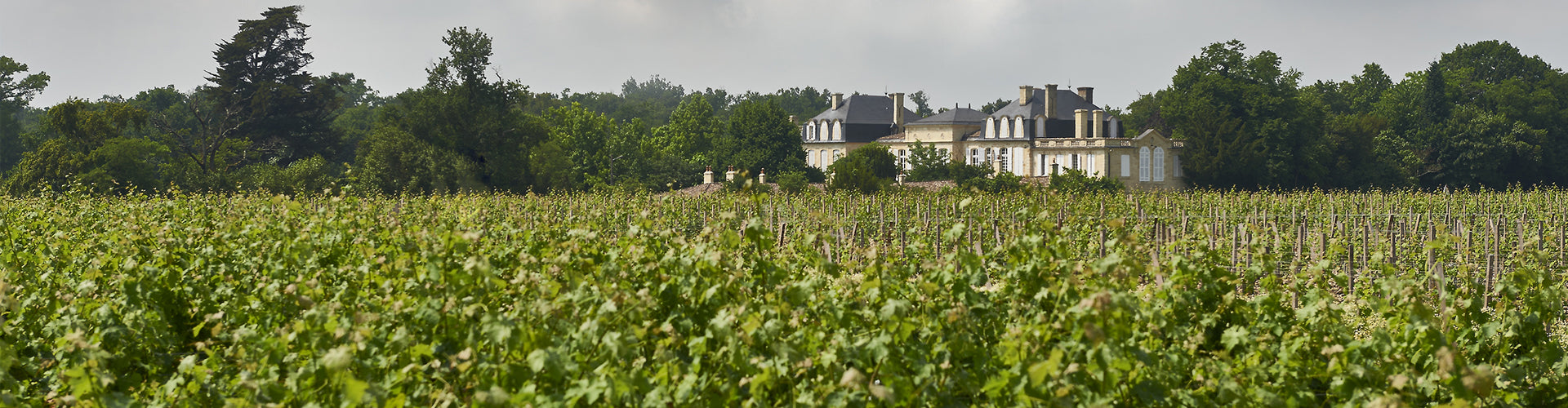 Château Léoville Barton Vineyards