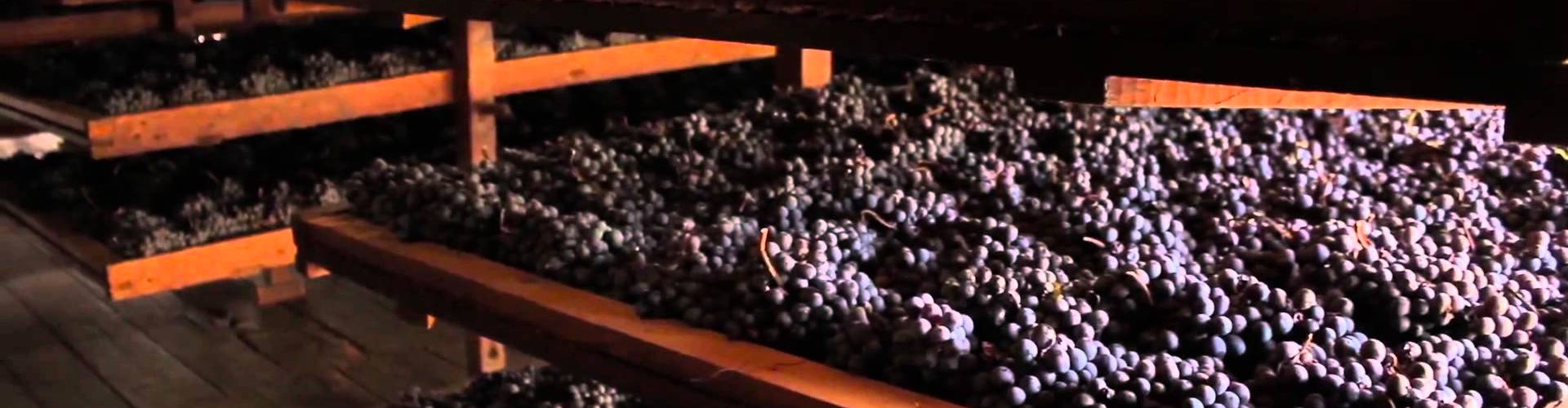 Corvina grapes drying in Bertani Cellar