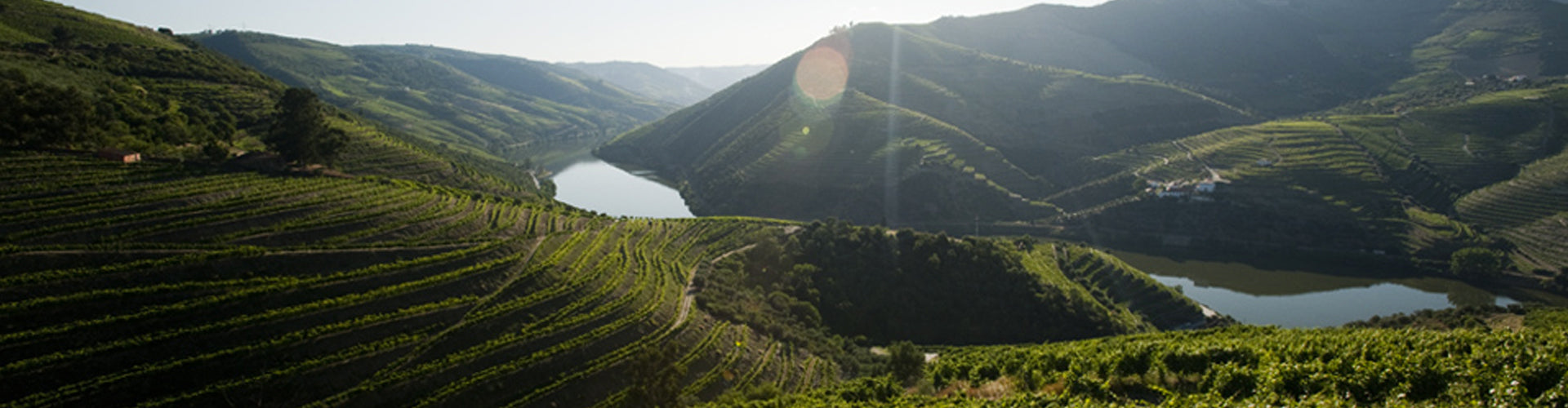 Ferreira Vineyards in the Douro Valley, Portugal