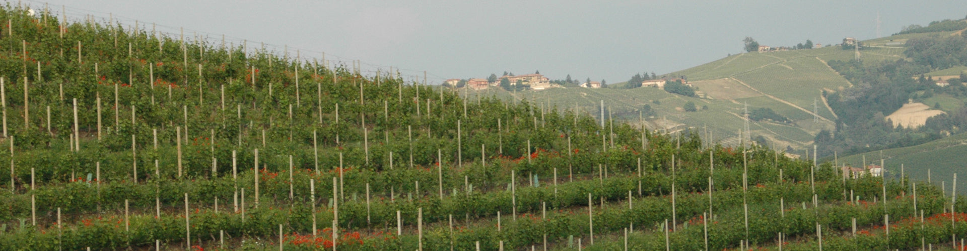 Castello di Neive Vineyards in Barbaresco, Piedmont in Italy