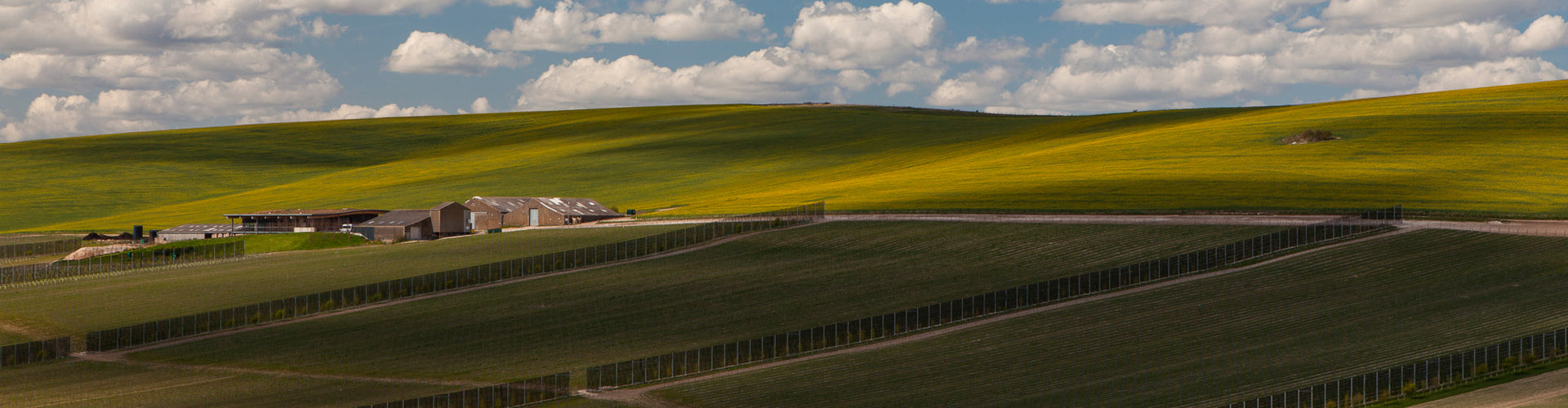 A panoramic vista of the Rathfinny Wine Estate & Vineyards in East Sussex