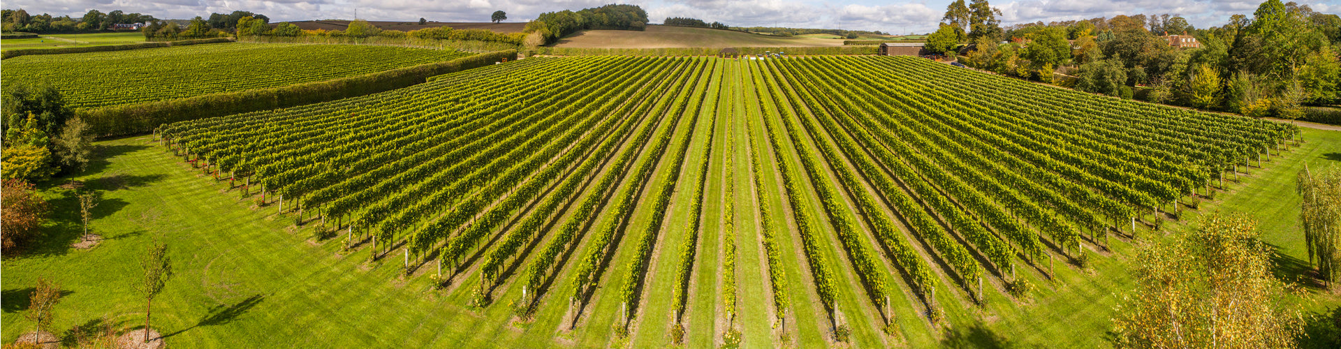 Arial view of Jenkyn Place's meticulously designed and planted vineyards