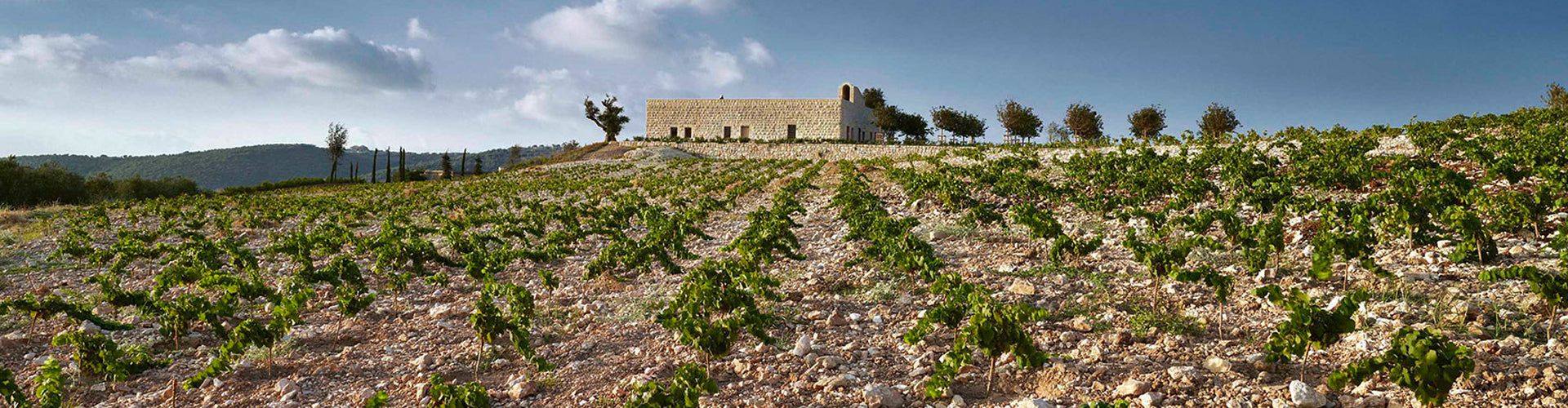 IXSIR Winery & Vineyards Batroun, Lebanon