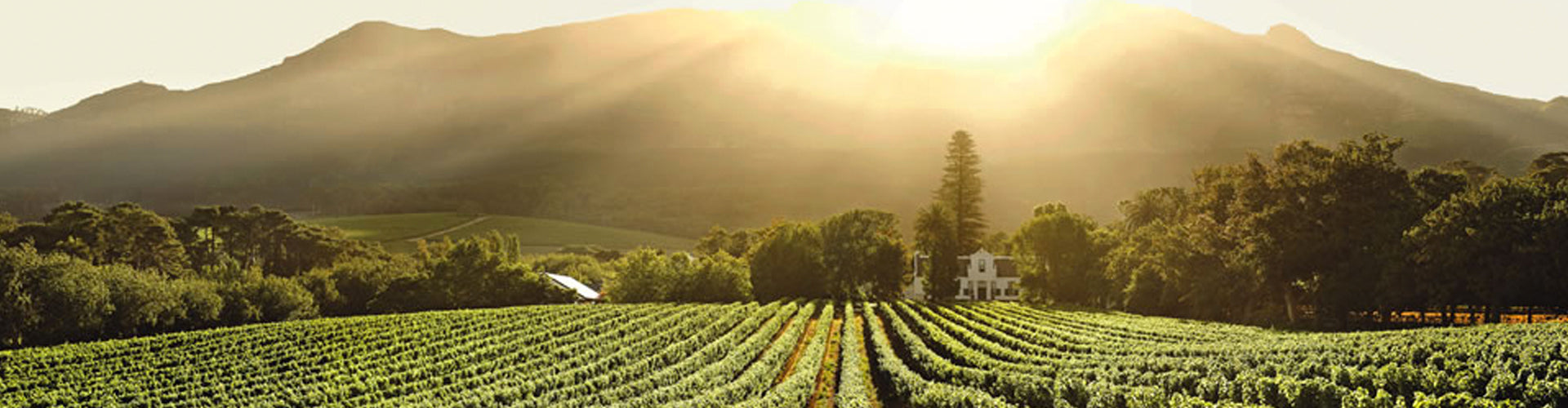 Buitenverwachting Vineyards in Constantia, South Africa