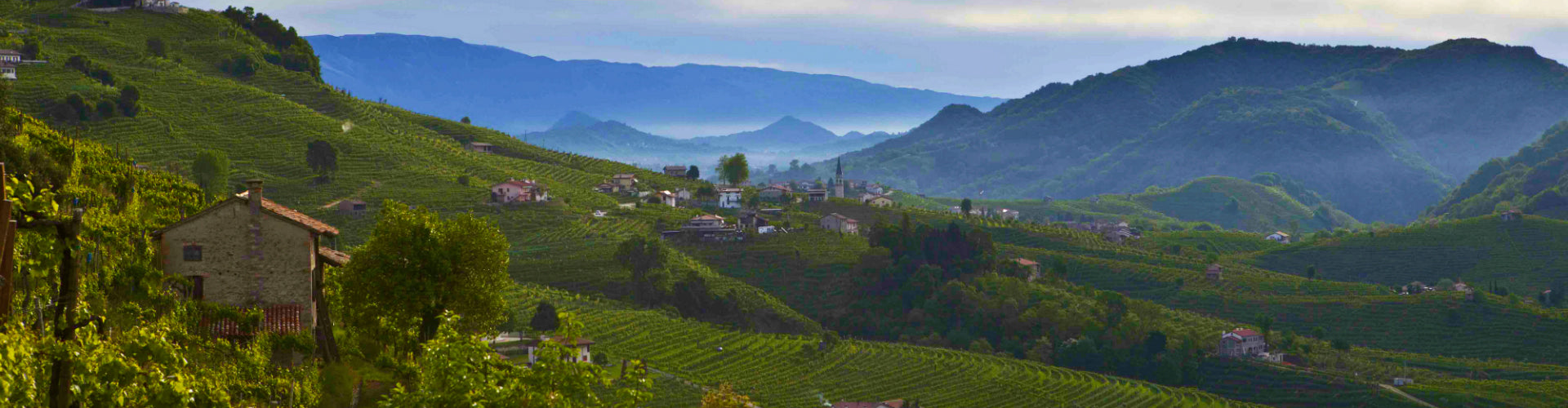 Le Colture Prosecco Vineyards Italy