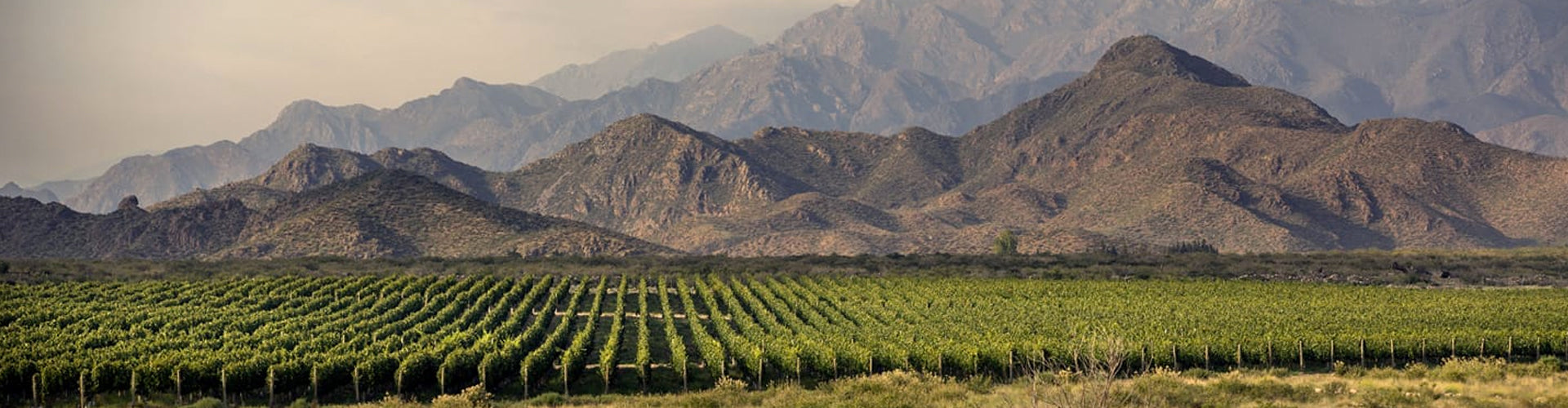 Bodega Los Toneles Vineyards in Mendoza