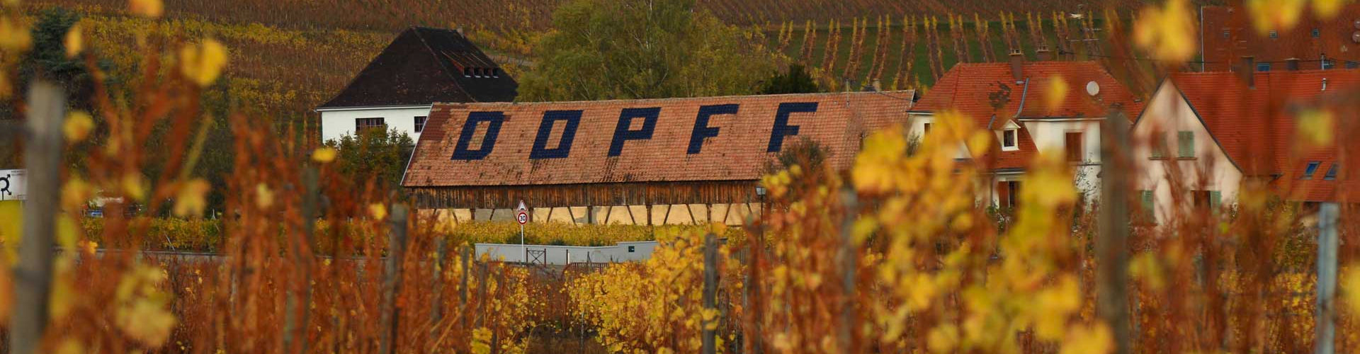 Roof of Dopff Winery through Vineyards