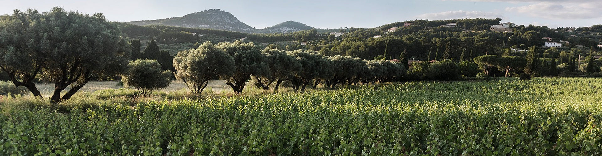 Domaine de Terrebrune Vineyards in Bandol, Provence