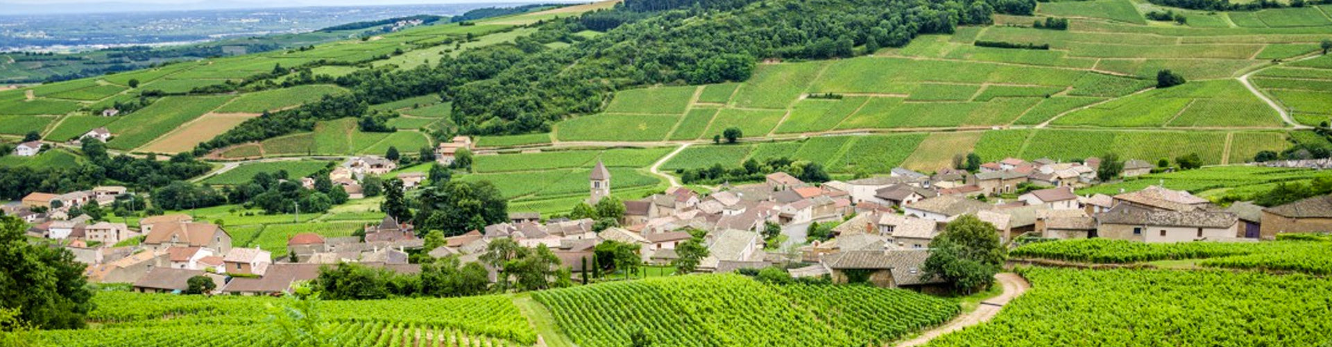 Vineyards in the Mâconnais Region of Burgundy